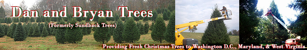 Freshly cut, locally grown Christmas Trees from Dan and Bryan Trees, Washington DC, Maryland and West Virginia