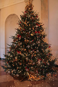The 2009 White House Christmas Tree after it was presented to President and First Lady Barrack and Michelle Obama by Eric and Gloria Sundback, of Dan and Bryans Christmas Trees (formerly Sundbacks Christmas Trees.)